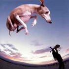 Paul Gilbert CD - Flying Dog